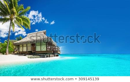 palme · spiaggia · isola · francese · polinesia · acqua - foto d'archivio © dolgachov