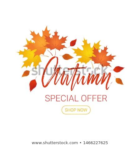 Gift card jesienią oferta specjalna sprzedaży wektora specjalny Zdjęcia stock © robuart