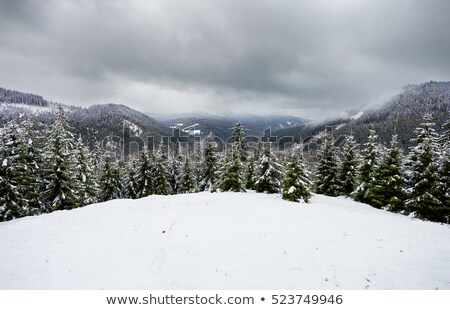 スキー パス 雪 テクスチャ 森林 自然 ストックフォト © inxti
