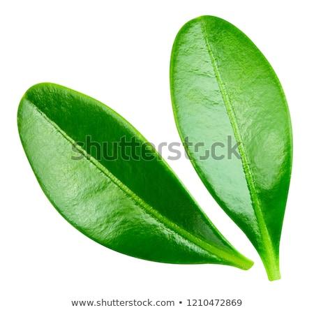 folhas · verde · medicina · vermelho · branco - foto stock © dionisvera