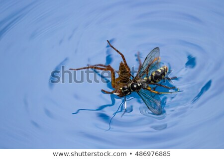Spider in swimmingpool Stock photo © rbiedermann