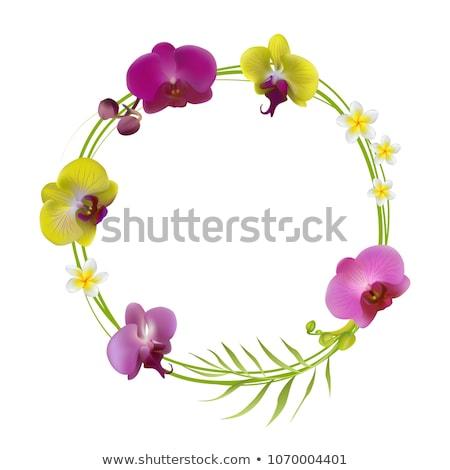 plumeria flower frame Stock photo © Witthaya