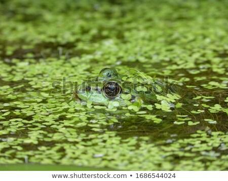 verde · dinheiro · água · azul · financiar · branco - foto stock © Sniperz
