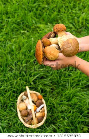 girl holding wild mushroom stock photo © photography33