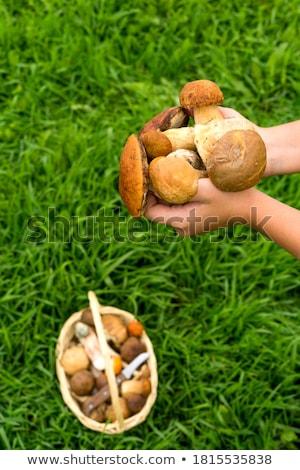 Girl holding wild mushroom Stock photo © photography33