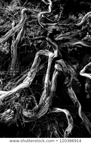 gedroogd · la · bodem · natuur - stockfoto © lunamarina
