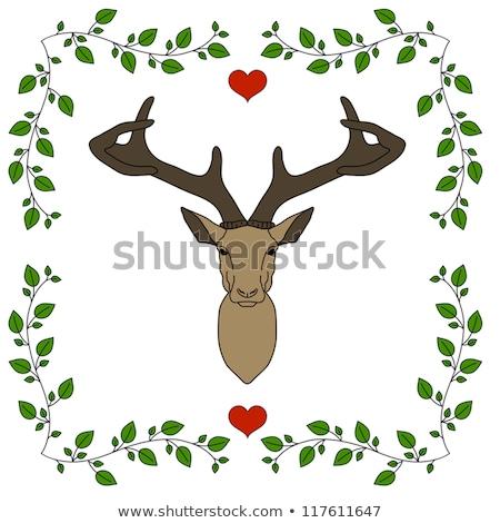 roe deer bedding Stock photo © taviphoto
