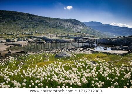 Verano escénico panorama Noruega soleado Foto stock © Harlekino