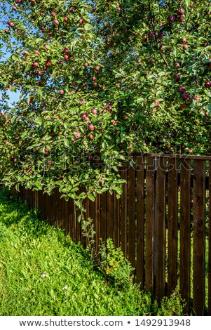 çiçek çit büyüyen gönderemezsiniz alan Stok fotoğraf © rhamm