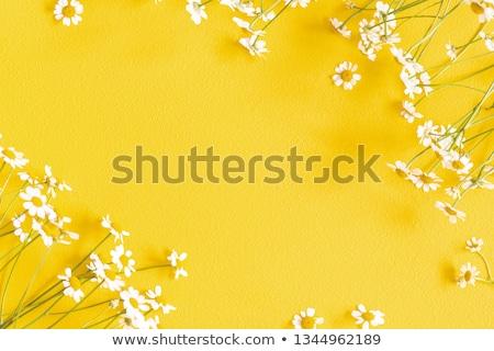 white flower in yellow background Stock photo © MiroNovak