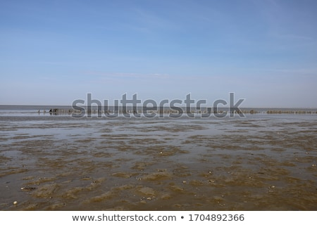 sea shore by the low tide stock photo © hanusst