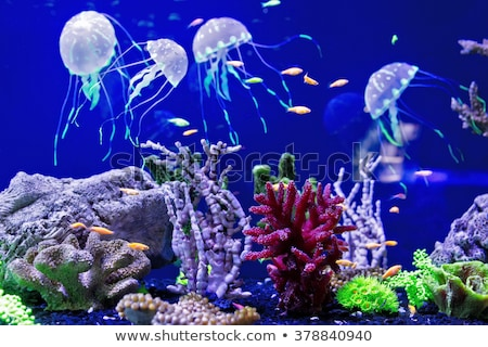 beautiful Jelly fishes in the aquarium with blue background Stock photo © meinzahn