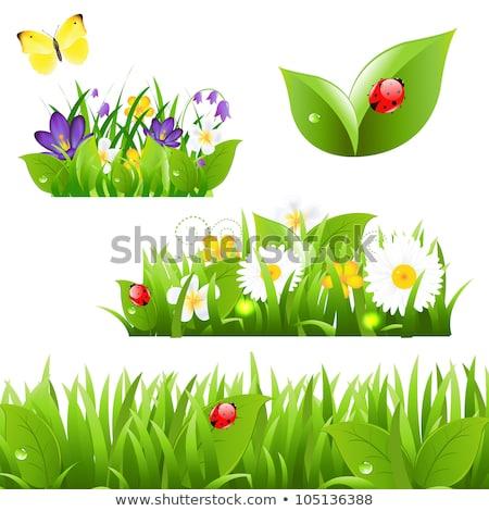 katicabogár · napraforgó · virág · szépség · nyár · piros - stock fotó © jonnysek