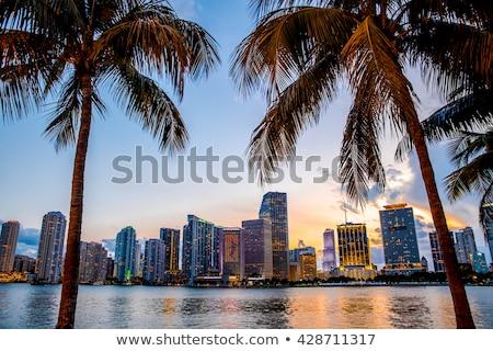 Sziluett Miami óceán város hotel szörf Stock fotó © meinzahn