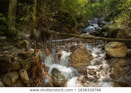 cross flowing stream stock photo © rghenry