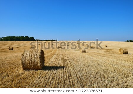 Harvested stubble fields with blue sky and clouds Stock photo © jenbray