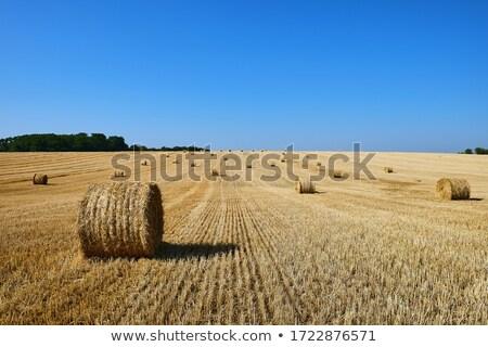 Restolho campos blue sky nuvens verão verde Foto stock © jenbray