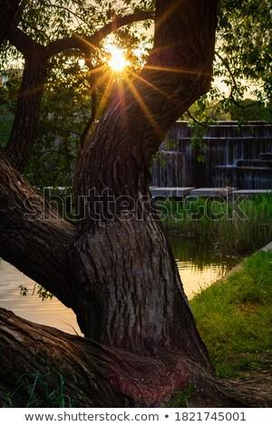 árvore · estrelas · costa · luzes · noite - foto stock © jameswheeler