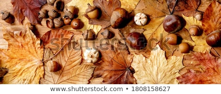 Rowan and maple leaves on a wooden table Stock photo © Valeriy