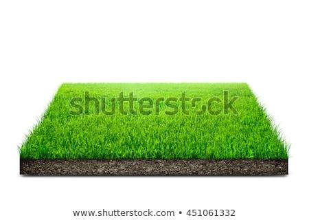 Zielona trawa biały drzewo wiosną charakter liści Zdjęcia stock © tetkoren