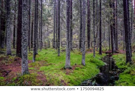 древесины мох зеленый лес аннотация Сток-фото © Kotenko