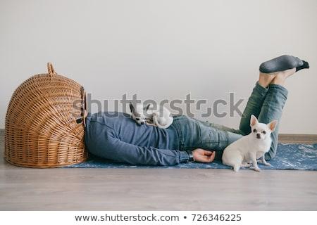 Little chihuahua dog sleeping on a man Stock photo © Giulio_Fornasar