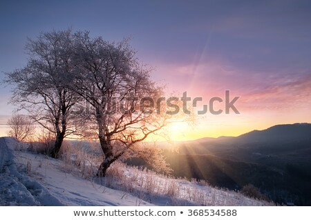 Stok fotoğraf: Kar · kapalı · ağaçlar · gün · batımı · dumanlı · dağlar