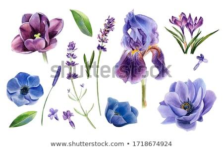 buket · mavi · kırmızı · yalıtılmış · beyaz · çiçekler - stok fotoğraf © val_th