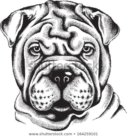 Man with shar pei dog Stock photo © svetography