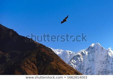 Foto d'archivio: Battenti · montagna · uomo · cielo · sport · natura
