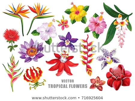 Tropicali fiori fiore orchidea bouquet design Foto d'archivio © galitskaya