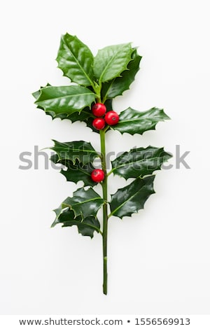 Mistletoe on white Stock photo © AGfoto