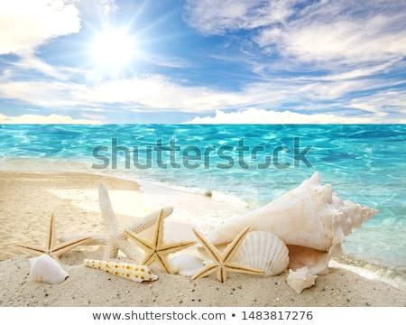 citromsárga · tengeri · csillag · izolált · fehér · háttér · óceán - stock fotó © photocreo