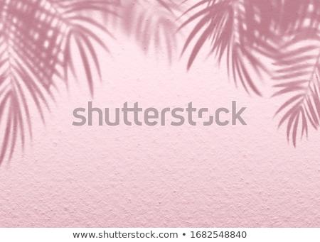 cemento · pared · sombra · palmeras · blanco · árbol - foto stock © H2O