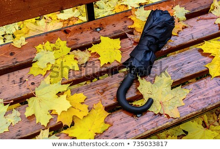 forgotten umbrella stock photo © stevanovicigor