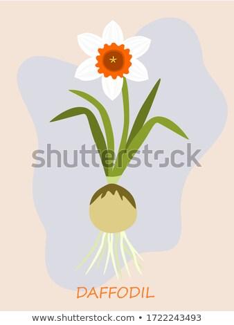 黄色 花 春 葉 背景 スイセン ストックフォト © compuinfoto