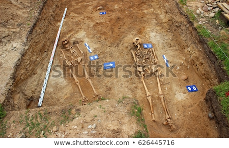 Pile of Bones with Skeleton 2 Stock photo © AlienCat