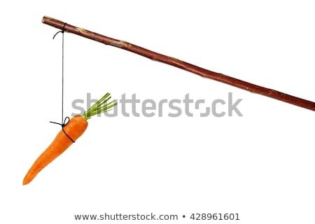 Carrot On A Stick Stock fotó © ajt