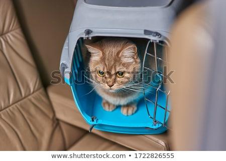 díszállat · kutya · macska · doboz · kék · utazás - stock fotó © shutswis