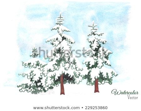 3  雪 カバー 木 フィールド 青 ストックフォト © DonLand