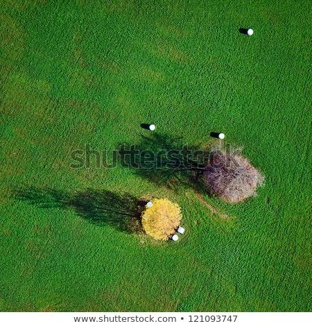 view over fields in autumn Stock photo © meinzahn