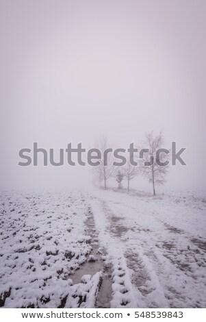 Quebrado gelo visível terreno textura abstrato Foto stock © fotoaloja