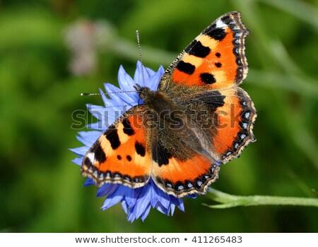 wenig · Schmetterling · farbenreich · orange · Tier - stock foto © rbiedermann