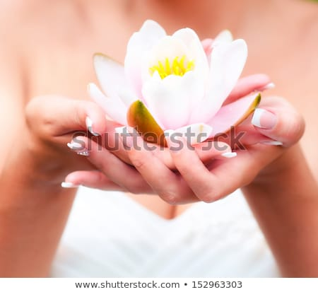 Woman hands holding lotus flower Stock photo © kasto