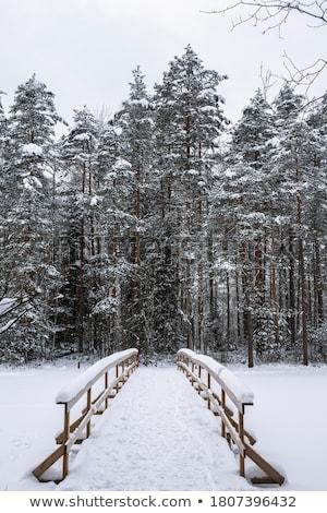 Güzellik açık havada güzel seksi kadın kış kadın Stok fotoğraf © dash