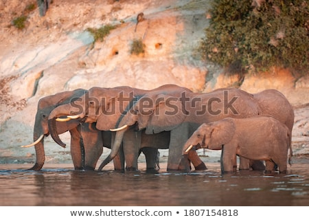 Botswana Sunset Stock photo © THP