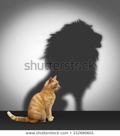 кошек лев среда обитания царя природы Сток-фото © ConceptCafe