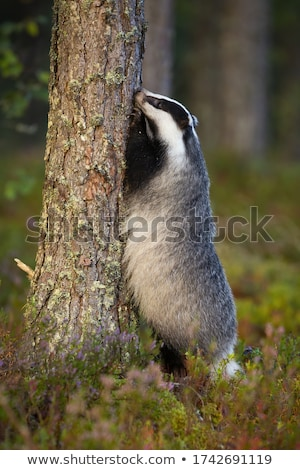 leg stretching position standing upright Stock photo © Giulio_Fornasar