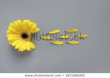 Vers Geel bloemen houten tafel tabel Stockfoto © wavebreak_media