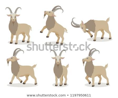 zły · koza · cartoon · skok · gospodarstwa · owiec - zdjęcia stock © marysan
